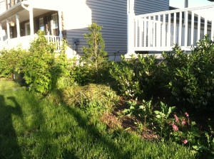 Before: needs mulch; weeding; and a clear edge