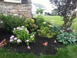 Flowerbeds 2014