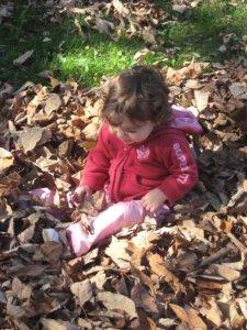 kals leaves